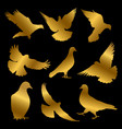 golden dove silhouettes isolated on black vector image vector image