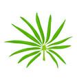 paml leaf icon cartoon style vector image