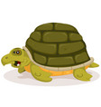 cartoon cute turtle character vector image vector image