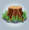 Tree stump with green grass isolated vector image