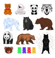 bear wild animal wild angry brown grizzly vector image vector image