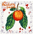 fresh peach with leaves vector image vector image