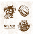 digital walnut hand drawn vector image