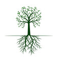 green tree with leaves and roots vector image vector image