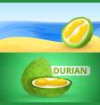 fresh durian banner set cartoon style