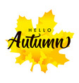 hello autumn lettering on yellow maple leaf vector image