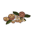 isolated clipart brazil nut vector image