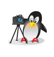 penguin with photo camera vector image vector image