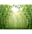 Bamboo trees inside the forest vector image vector image