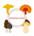 mushroom set - bolete reishi chanterelle morel vector image