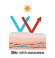 skin with sunscreen icon flat style vector image