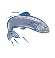 Angry Sardine Fish Jumping vector image vector image