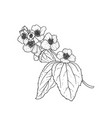 black and white branch flower jasmine outline vector image vector image