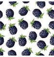 blackberry pattern vector image vector image