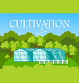 greenhouse farming flat vector image