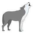 grey wolf on white background vector image vector image