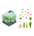 isometric goldfish in freshwater aquarium vector image