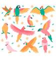 tropical parrots jungle colorful birds cute vector image