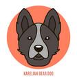portrait of karelian bear dog vector image