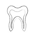 human tooth isolated icon vector image vector image