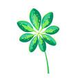 schefflera arboricola leaf vector image vector image