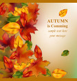 autumn leaves on blurry background realistic vector image