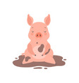 cute little pig sitting in a dirty puddle funny vector image