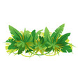 green jungle leaves composition vector image vector image