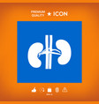 human organs kidney icon vector image