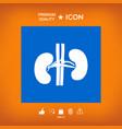 Human organs kidney icon