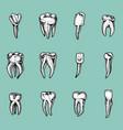 molar teeth enamel dental set work of the vector image