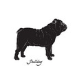 black silhouette of dog english bulldog vector image
