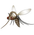 comical mosquito vector image vector image