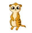 cute meerkat on a white background in cartoon vector image vector image