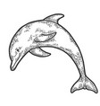 dolphin jumping sketch engraving vector image vector image