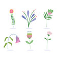 flowers petals leaves branch nature wild botany vector image