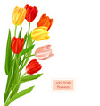 isolated tulips flowers spring vector image vector image