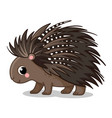 a cute porcupine stands in vector image vector image