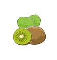 Kiwifruit Isolated on White vector image vector image