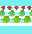 hydroponics plants farm in flat cartoon vector image vector image