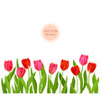 isolated tulips flowers vector image vector image