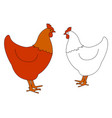 red and white chicken on white background vector image vector image