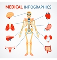 Human organs infographic vector image vector image