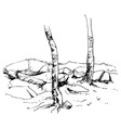 sketch of tree trunks and rocks vector image vector image