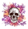 sketch skull vector image