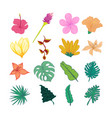 decorative tropical flower and leaves hand drawn vector image