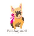 small bulldog vector image vector image