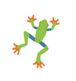top view green tree frog with orange sticky vector image vector image