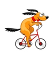 Dog rides a bicycle vector image