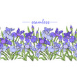 iris flowers purple and blue iris ornament vector image vector image